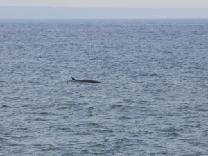 060816-23b-qc-baleine