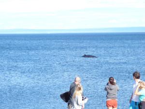 060816-23c-qc-baleine