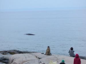 060816-23d-qc-baleine